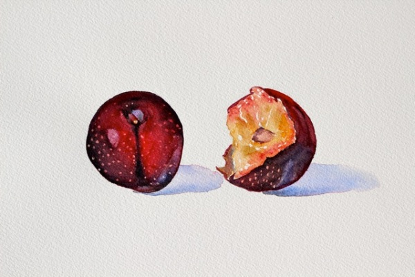 Two Plums, Watercolor, 8 x 11 inches