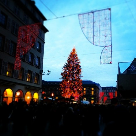 The huge Christmas tree in the square in Strasbourg.