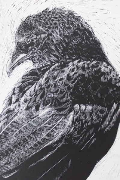 Crow Turning, Scratchboard, 5 x 7 inches